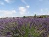 Provence_2014_MJ_02370