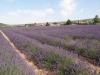 Provence_2014_MJ_02374